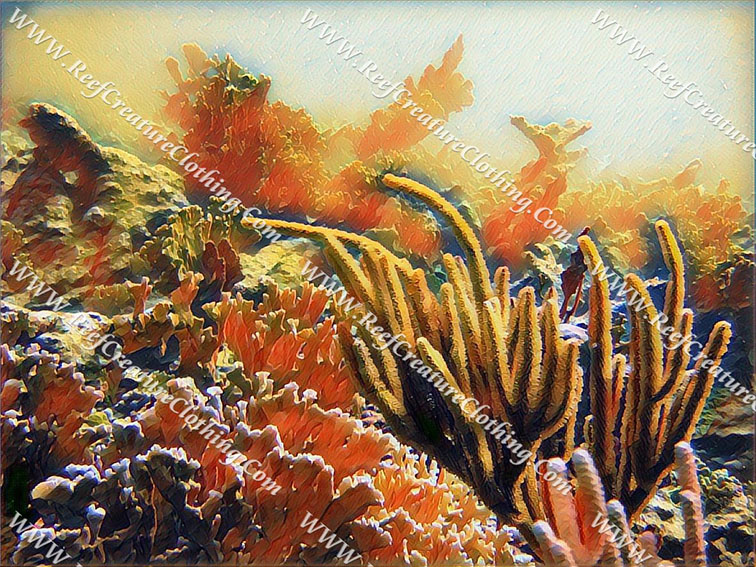 Soft Coral and Elkhorn Coral