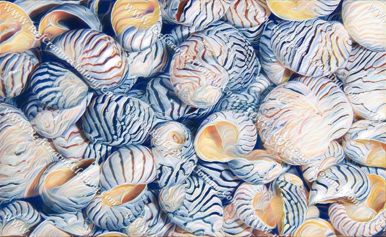 Caribbean Nerite Shell