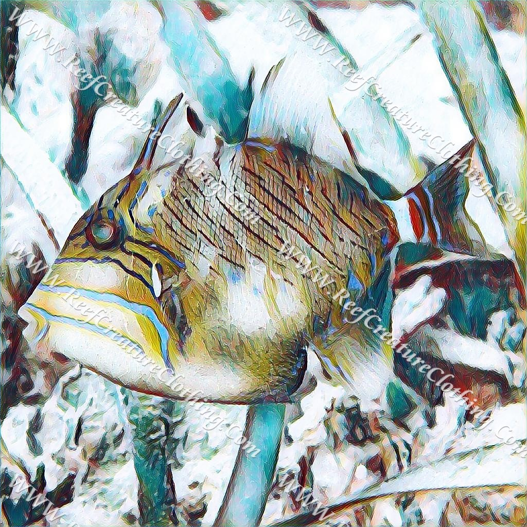 Queen Triggerfish Juvenile - Reef Creature Clothing Blog